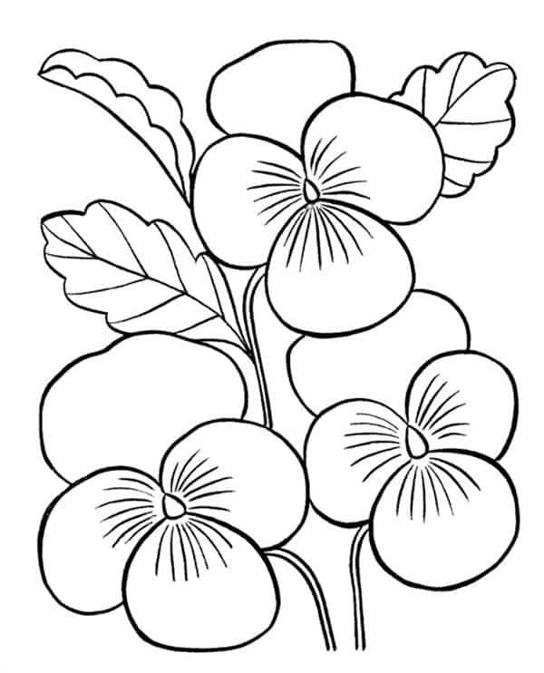 desenhos de orquideas